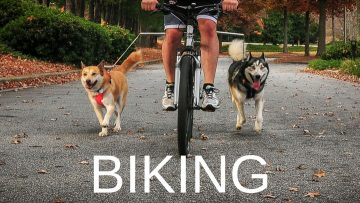 biking-with-dogs
