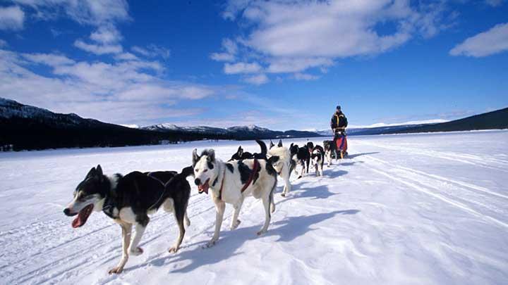 dog-sledding-history