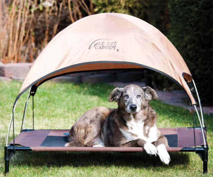 Top 10 Outdoor Dog Beds - Outdoor Dog World