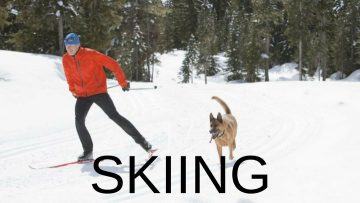 skiing-with-dogs