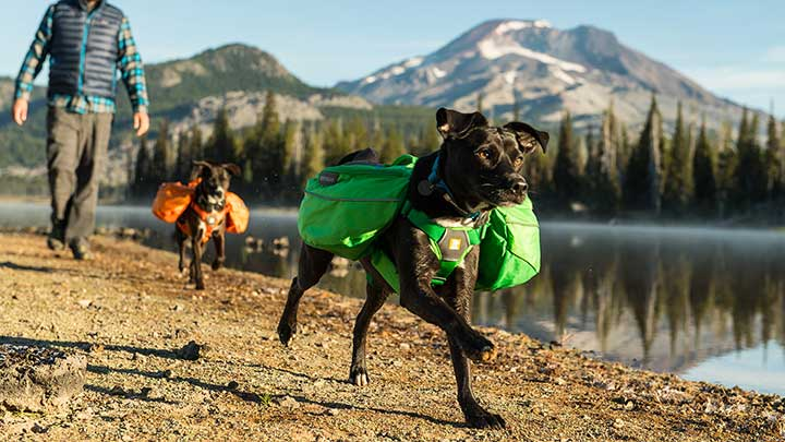 Ruffwear-Approach-Full-Day-Hiking-Pack-for-Dogs