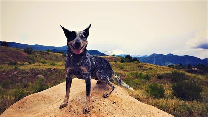 acd-hiking-dog