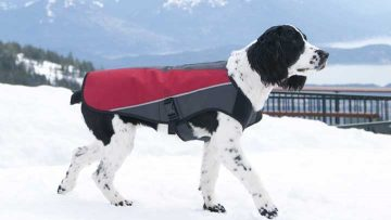 ezydog-element-dog-jacket-winter