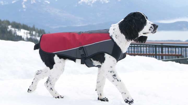 ezydog-element-dog-jacket-winter