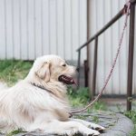10 Best Outdoor Dog Chains in 2018