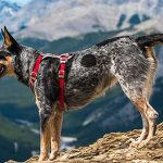 8 Best Dog Hiking Harnesses in 2019