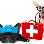 Complete Guide to Dog Hiking First Aid (and the Best Dog First Aid Kits)