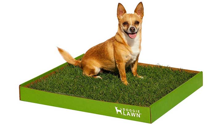 doggie-lawn-disposable-dog-potty