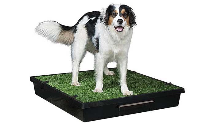 petsafe-portable-dog-potty