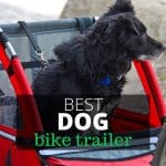 10 Best Bike Trailers for Dogs