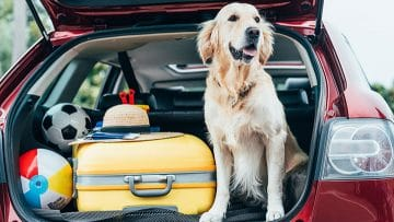 dog-travel-gear