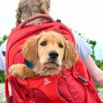 11 Best Dog Carrier Backpacks for Hiking, Walking, or Travel