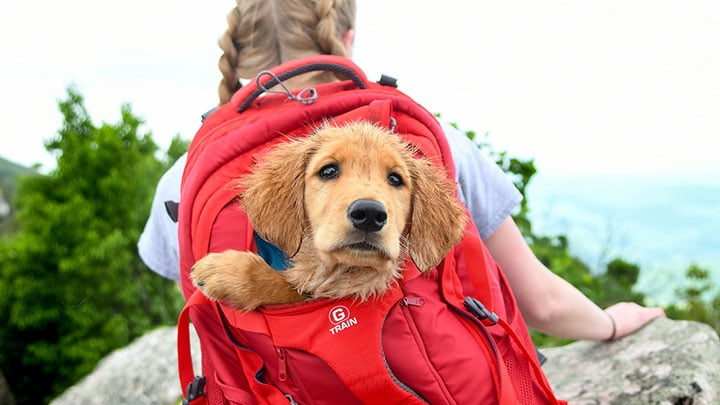 dog-hiking-first-aid-guide