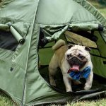 10 Best Dog Tents (Yes, These Tents are Actually for Dogs!)
