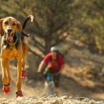 Best Dog Boots for Hiking, Hunting, and Extreme Conditions