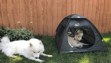 pettom-dog-camping-tent