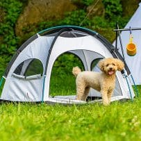 10 Best Dog Tents (Yes, These Tents are Actually for Dogs