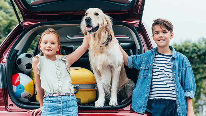 best-cars-for-dogs
