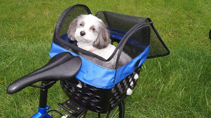 bikase-dairyman-rear-dog-basket
