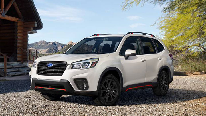 subaru-forester-for-dogs