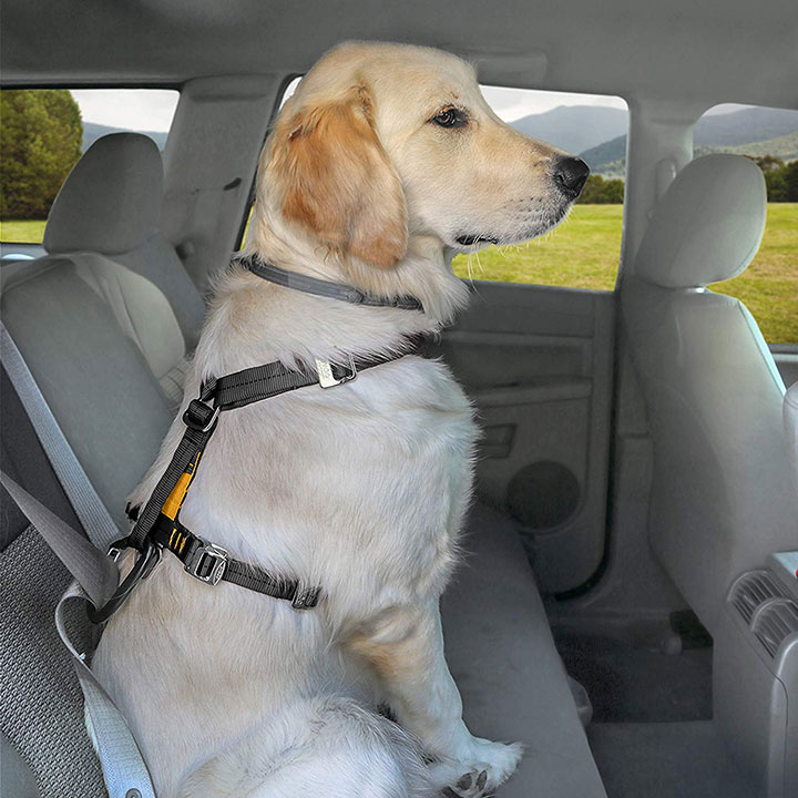 Best Dog Seat Belt >> 5 Best Car Harnesses And Seat Belts For Dogs In 2019