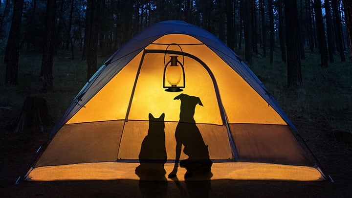 How to Hike with Dogs AND Cats: A Guide - Outdoor Dog World