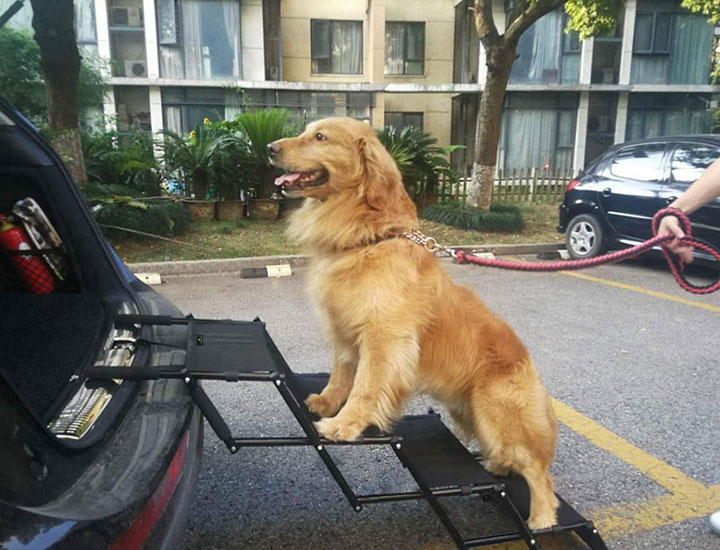 flightbird-car-dog-ramp
