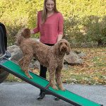5 Best Car/Truck Ramps for Dogs in 2019
