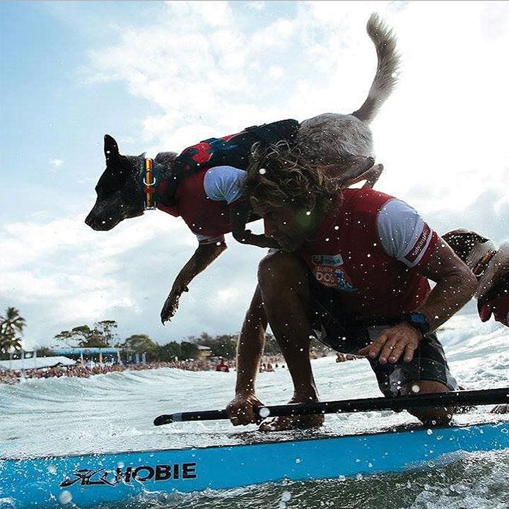 ezydog-doggy-flotation-device