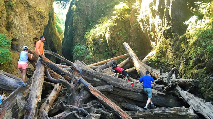 hiking-oneonta-gorge-with-dog