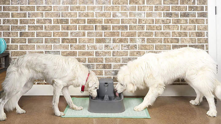 Have An Inquiring Mind Pet Drinking Fountain Dishes, Feeders & Fountains