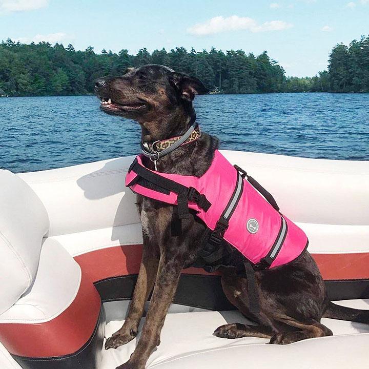 vivaglory-dog-life-jacket