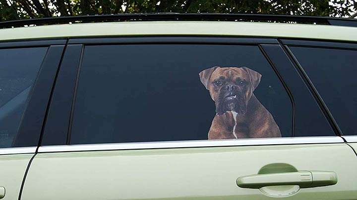 doggie-in-the-window-realistic-dog-decal