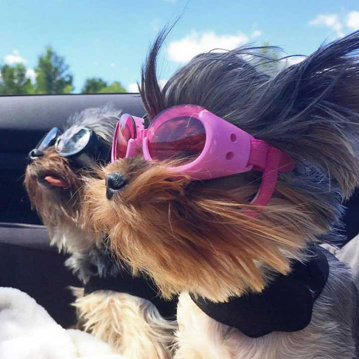 doggles-sunglasses
