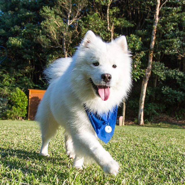 dott-the-smart-dog-tag