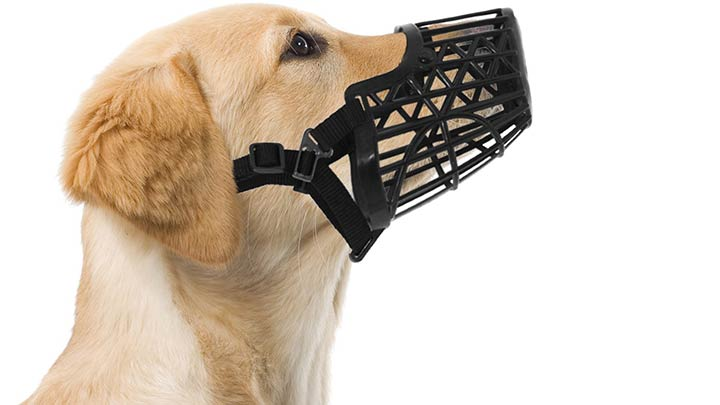 downtown-pet-supply-basket-cage-dog-muzzle