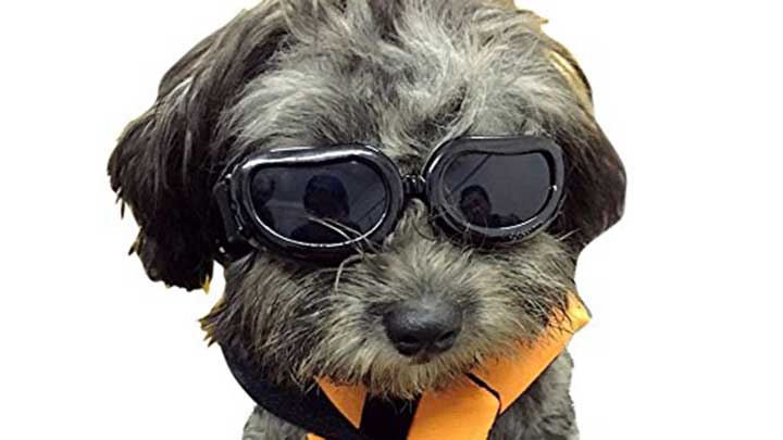 enjoying-dog-goggles