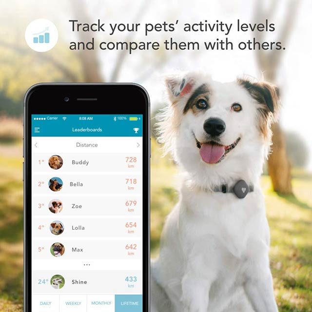 findster-duo-plus-pet-tracker