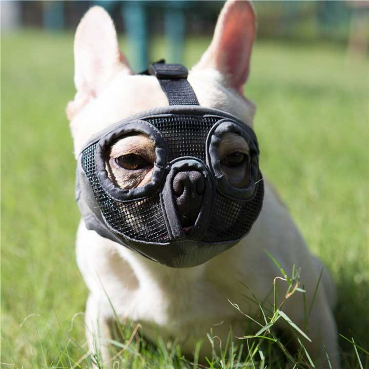 jyhy-short-snout-dog-muzzle