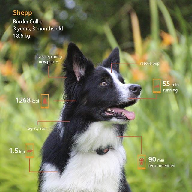 pitpat2-dog-activity-monitor