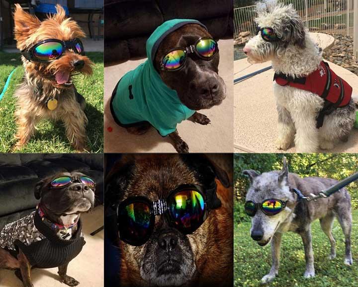 qumy-dog-goggles