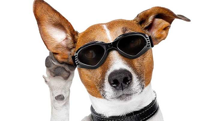 vevins-dog-goggles
