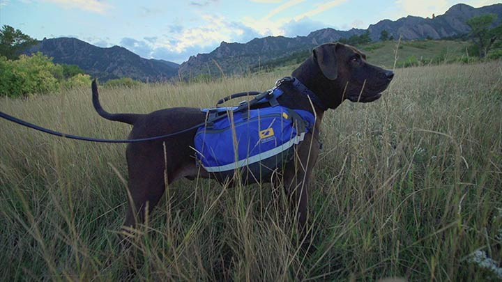mountainsmith-k9-dog-pack