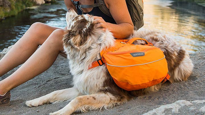 ruffwear-approach-dog-pack