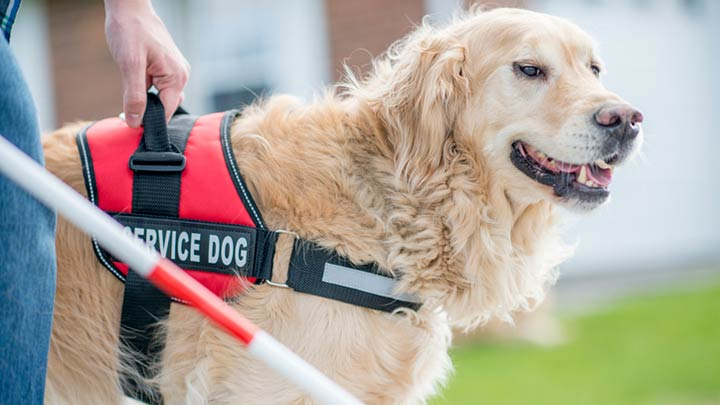 best-service-dog-harnesses