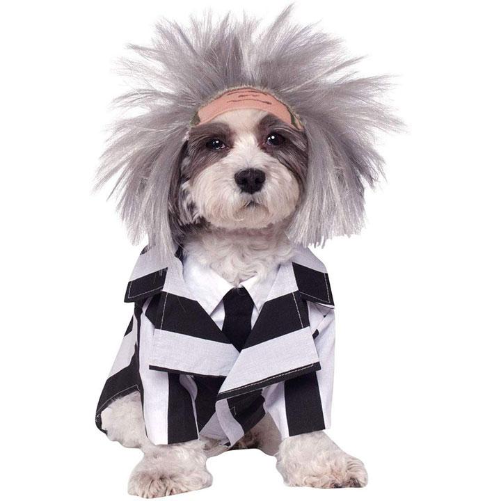 beetlejuice-dog-costume