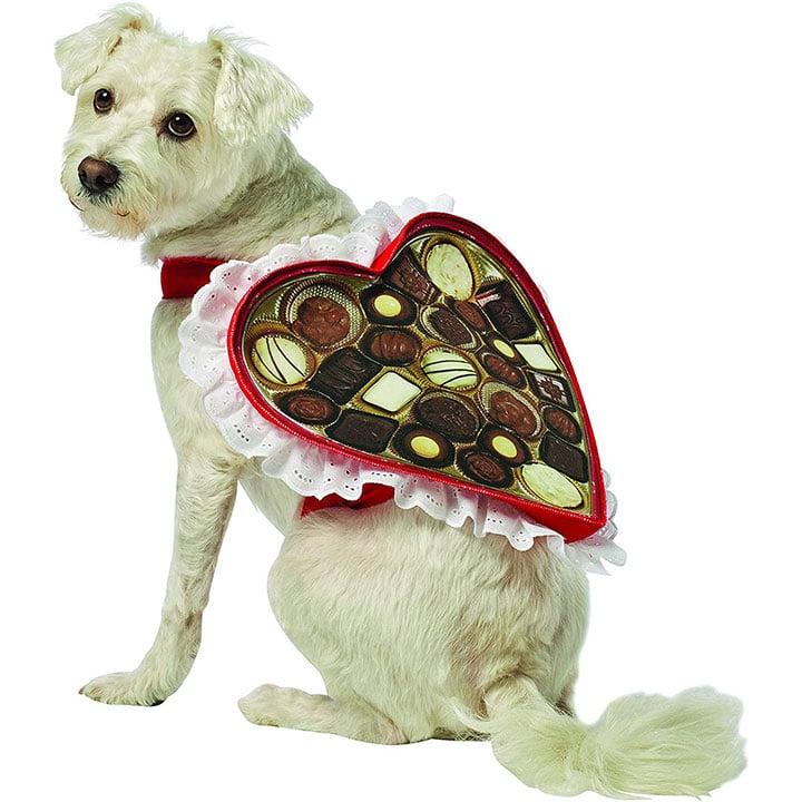 chocolate-box-dog-costume