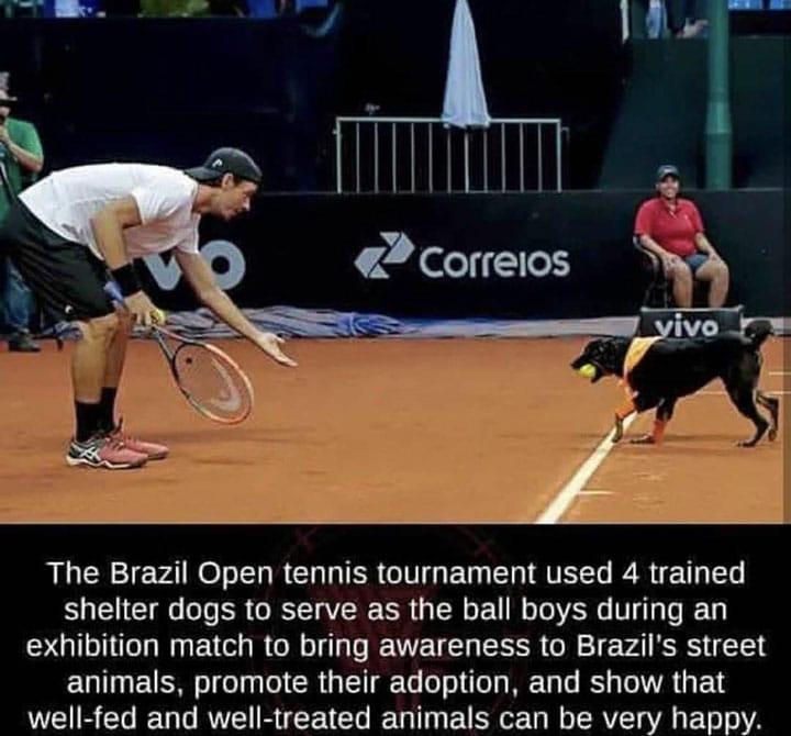 dog-ball-boy-tennis