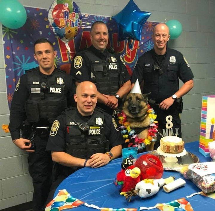 german-shepherd-police-dog-birthday
