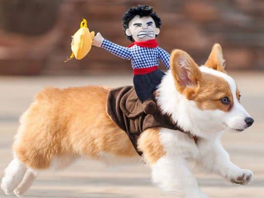 horse-cowboy-dog-costume